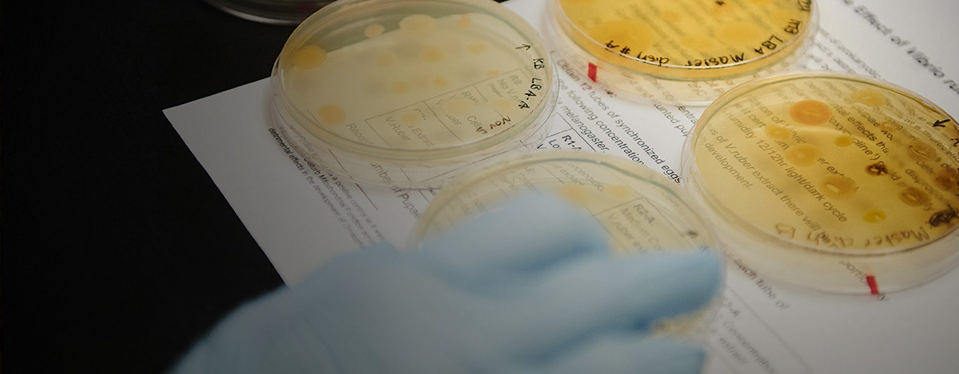 Petri dishes in a lab